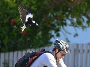 CHECK THE MAGPIE MAP: Eyes to the skies in swooping season