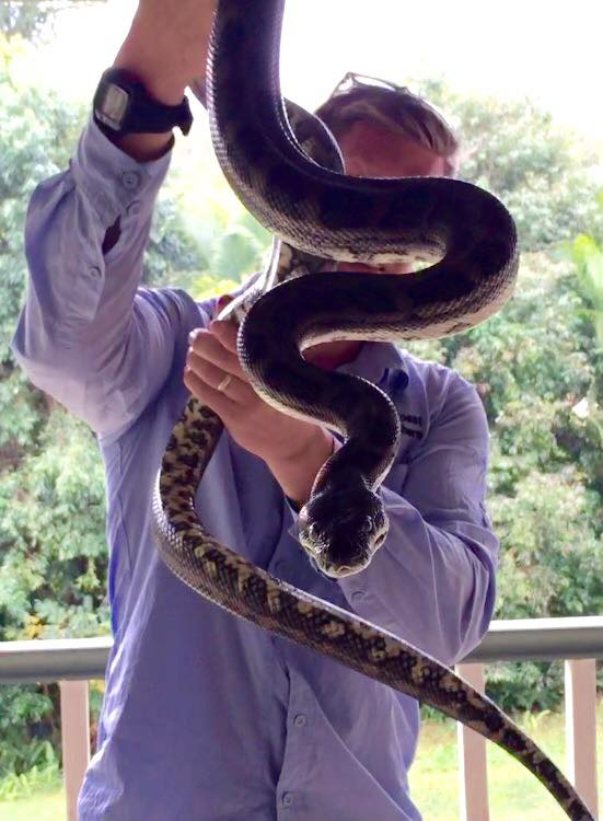 A snake pulled from a Buderim rooftop.