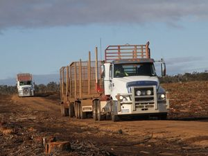 Cat's shine in the west with logging family