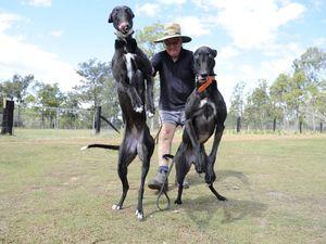 Winning Greyhounds