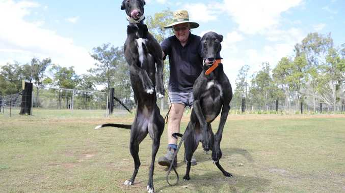 Co-owner and trainer of greyhounds Black Lee Bonus (left) and Miss Sprightly, Len Harris of Whiteman Creek. Photo Debrah Novak / The Daily Examiner