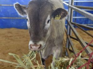Casino meat processor shuts doors early for Christmas