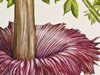 Detail of Julie McEnerny's Amorphophallus titanum part of the Offshoot exhibition now on display at the Grafton Regional Gallery.