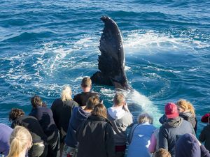 Stay alongside the whales in Hervey Bay playground