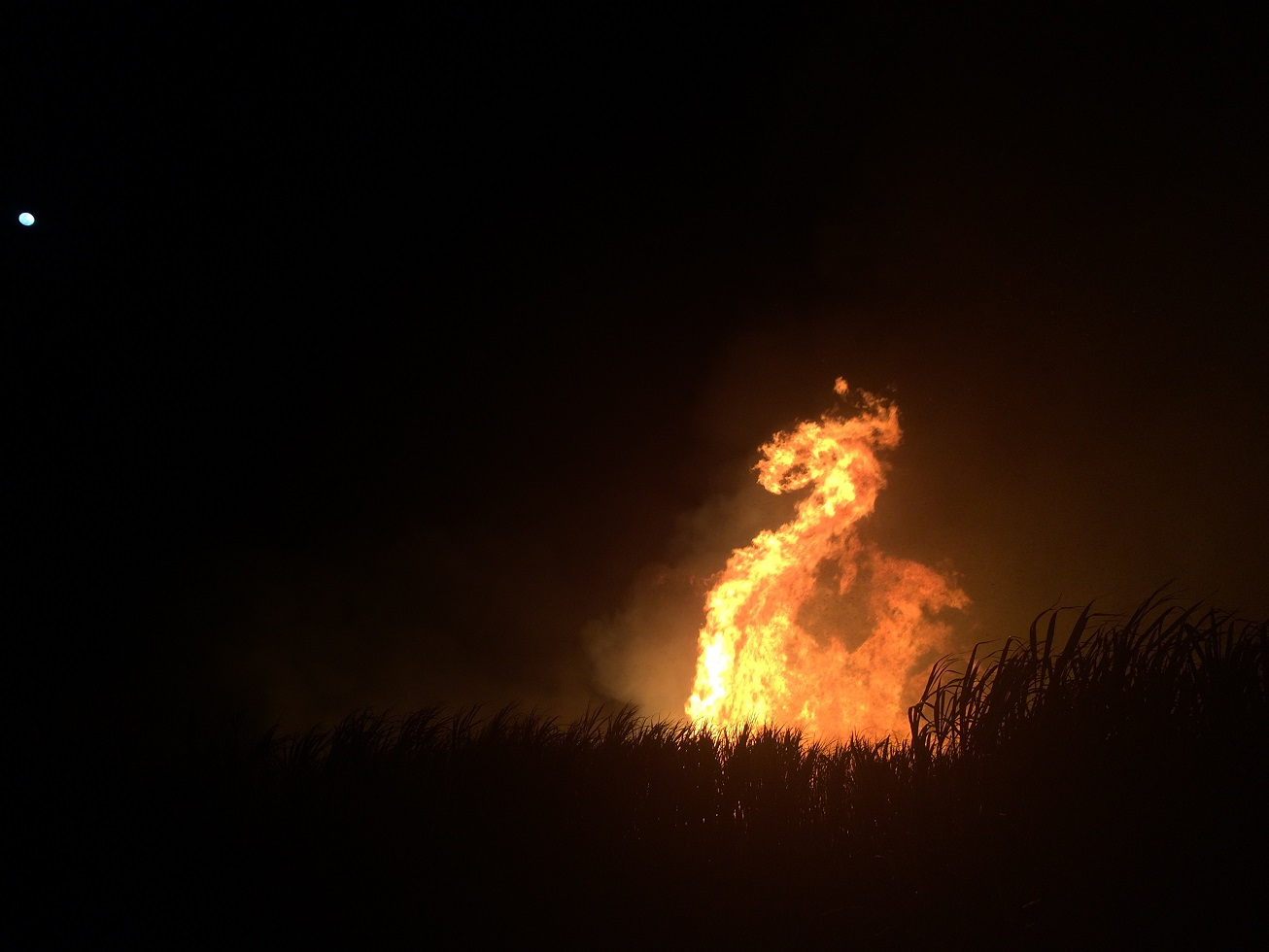 Paul Stanley-Jones snapped this shot of a cane fire just at the moment it curled into exactly the shape of a giant fire-breathing dragon!