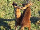 WHAT could be more Aussie than a couple of wallabies going the biff at Australia's most easterly point?Debby Ginger's image of two wallabies laying it on at Cape Byron entertained quite a few of our pollsters on Friday. A total 23% picked it as their favourite, making it the poll's runner-up and today's Photo of the Day.Photo of the Day celebrates the beauty of the Northern Rivers and the talent of its people.As well as appearing here, the Photo of the Day is published on our website and appears as the cover image on our Facebook page. To submit an image for Photo of the Day, simply share it to our Facebook page.
