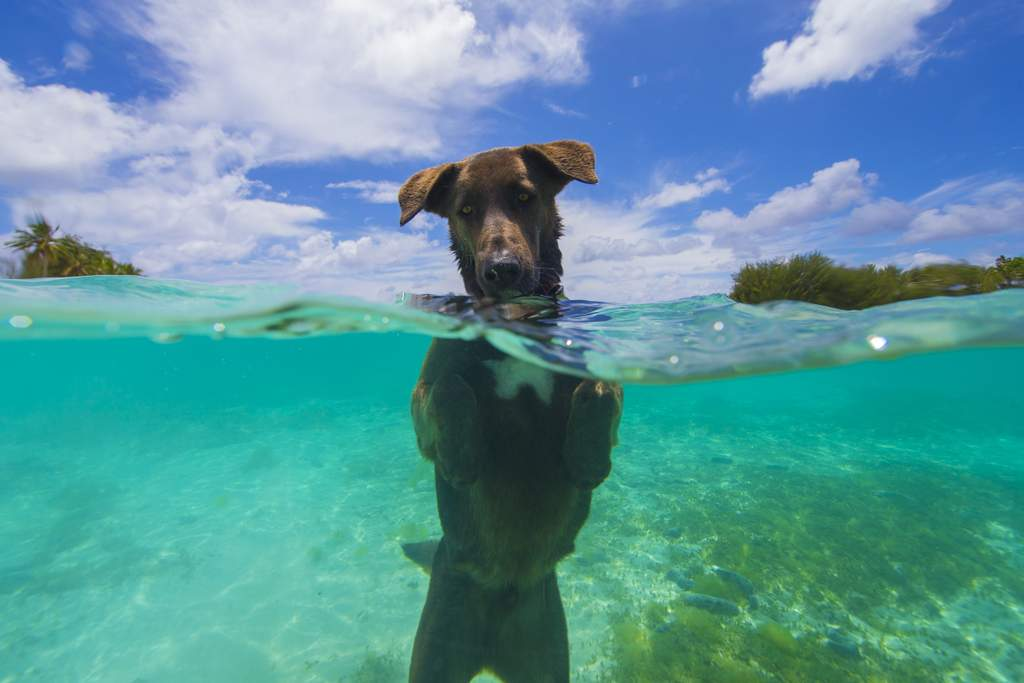 Fishing with the dog in the Cook Islands.