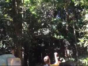 Blue Tiger butterflies surround tourists at Cape Hillsborough