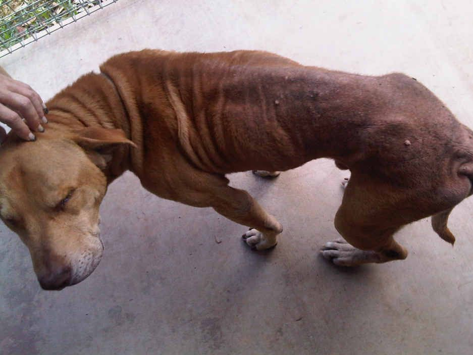 Boof, who was eight, was left tethered to a chain just 1.5m long for weeks on end, denied flea treatment which gave him a skin condition and suffered a secondary skin condition, the Maryborough Magistrates Court heard.