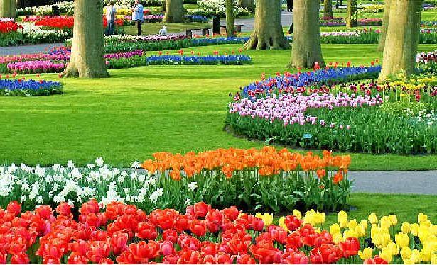 Keukenhof Gardens in Amsterdam.