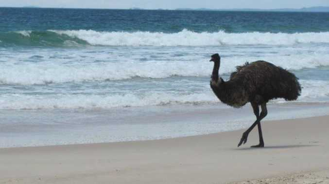 Eric the emu's Facebook page has been overflowing with posts from upset residents.