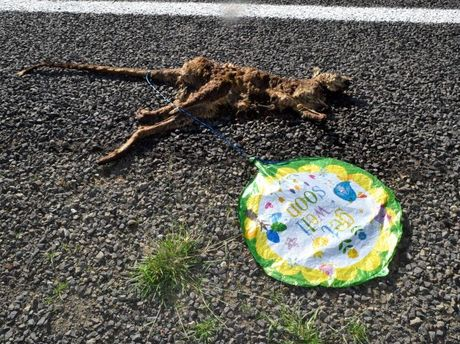 Roadkill from Roma to Mitchell were given 'Get Well Soon' balloons on Sunday.