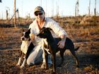 PEST PROBLEM: Wild dog hunter Gordon Gee, pictured with his work dogs, says Rockhampton is one of the worst areas for dog populations. Inset: Gordon sets a dog trap near The Caves.