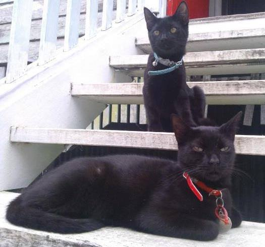 These were some of the photos and comments we received when we asked our readers to share a photo of their favourite furry or feathered friend. Leonie Guy - My two cats, Felix (front ) and Miku.