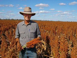Sorghum farmer's harvest