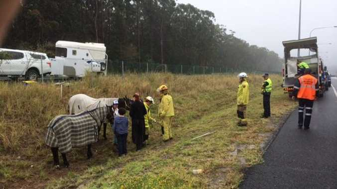 The two horses avoided injury after the crash earlier