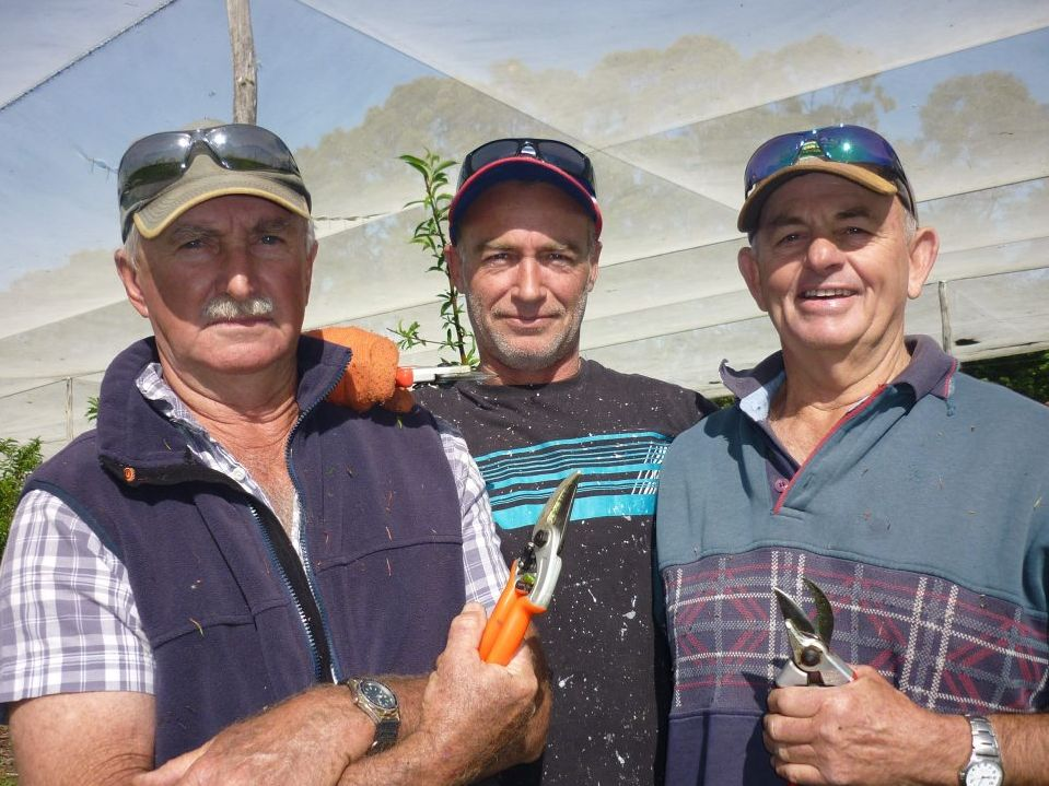 TIGHT TEAM: Rod Thomson and orchard hands Dave Bryant and Tony Ratley, who originally established this orchard in 1992. Photo Jamie Brown / Northern Star