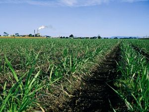 Sugar industry worth $322m to Qld economy