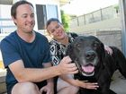 LUCKY ESCAPE: Liz and Andrew McGreevy spent last week frantically searching for their labrador only to find out he had been in the pound the whole time. Photo Helen Spelitis / Gladstone Observer