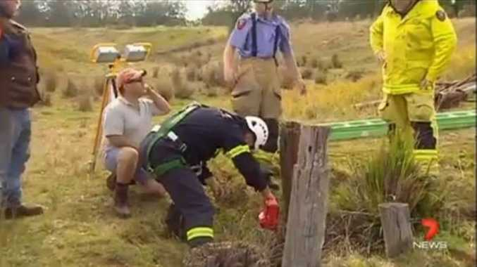 Highfields auxillary firefighters rescue Sampson the calf from a 10m well at a Geham property.