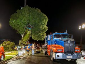 Giant 15-tonne tree lifted from street in massive operation