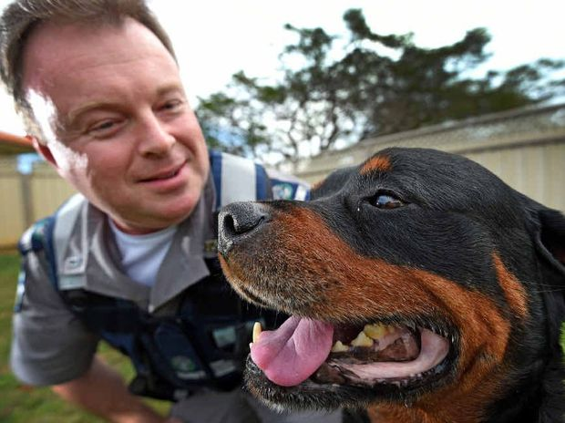 SPECIAL BOND: Guard dog Bruno has been diagnosed with cancer and will be greatly missed by security officer Rick Beddoes.
