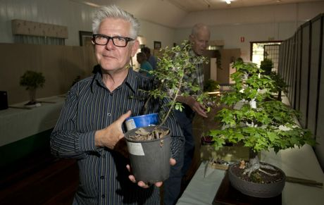 Ex Toowoomba resident Barry Winter attended his first carnival in 35 years. Will start a new hobby with bonsai back in brisbane.Toowoomba Bonsai Group annual show. Carnival of Flowers 2013 . Photo Nev Madsen / The Chronicle