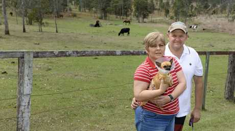 Debra and Garry Auld nearly had their purebred Chihuahua, Bella taken from their property by a Wedge-tailed eagle Photo: Rob Williams / The Queensland Times