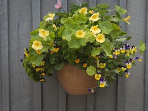 Hanging baskets out for carnival