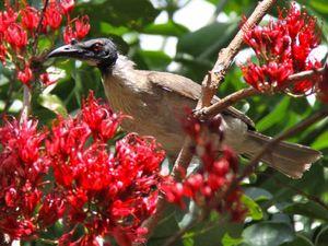 Botanic Garden delights for school break