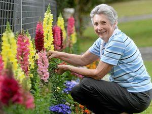 Flowers bloom for Murwillumbah garden club show