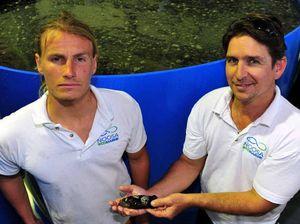 Industrial estate turns fish farm