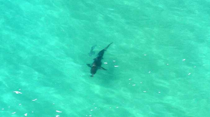Richmond mayor says air surveillance was one of the most effective ways to monitor sharks and alert swimmers of their location.