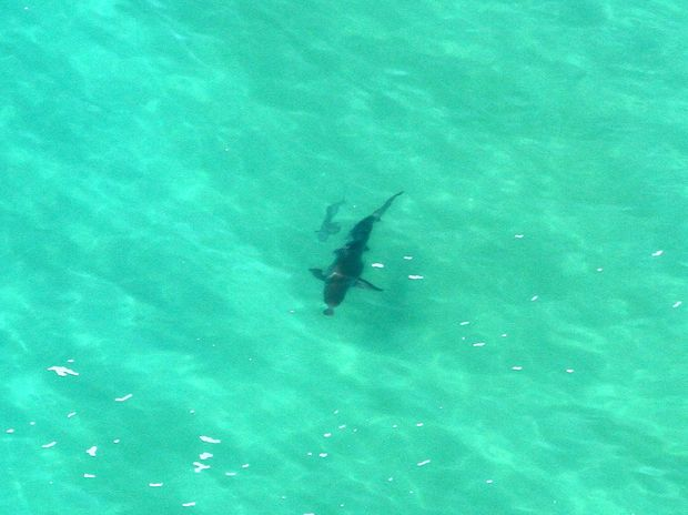 Shark sightings off North Coast beaches are impacting on tourist numbers, the tourism industry reports.