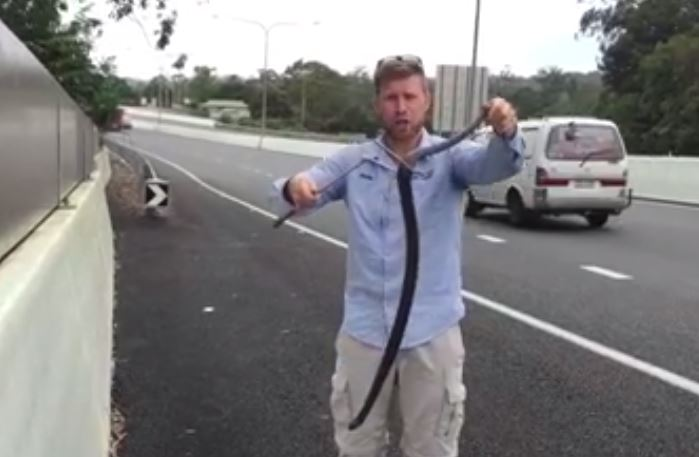 Sunshine Coast snake catcher Richie Gilbert pulls a venomous Red-Bellied Black snake from a car's engine.