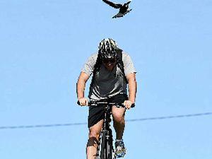 Backyard Buddies tips on avoiding magpie attacks