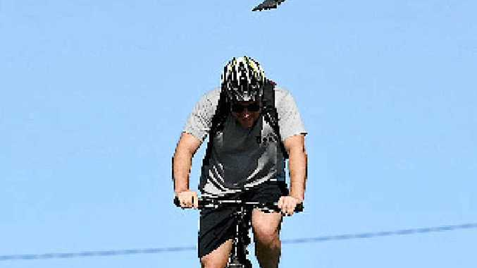 SPRING DIVE: Magpie season is under way with swooping becoming more frequent.