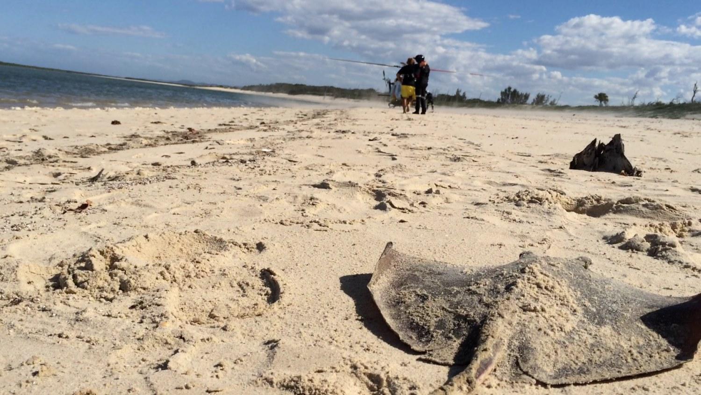 A sting ray injured a man at Corio Bay yesterday