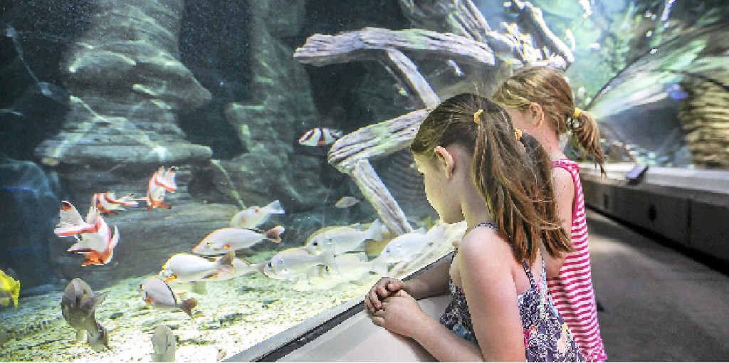 WHOLE NEW WORLD: Get up close and personal with all the creatures at Sea Life Mooloolaba these school holidays.