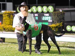 Greyhounds: Lavis hopes Mincin' Machine breaks Cup drought