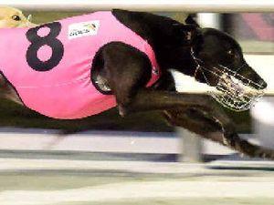 Sydney trainer grabs the cash at Queen Elizabeth Park