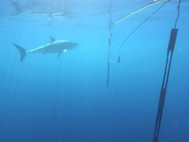 A still from a promotional video for Aquatek Technology's Shark Repelling System.