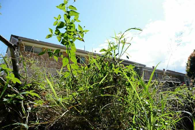 OUT OF CONTROL: This overgrown patch of land has yet to be tended to despite numerous calls and requests over many months from concerned resident Gayle Thew.
