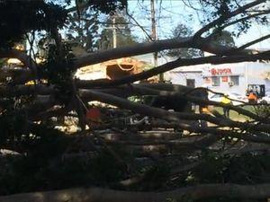 Fallen tree at Keen Street