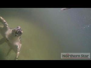 Australian Seabird Rescue turtles