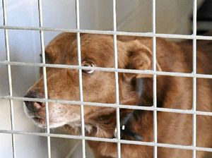 Dogs left to die after families abandon pets