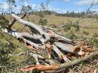 100 year old gum trees blown over during storm at Gunalda near Gympie
