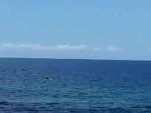 Kayaker paddles out to whales