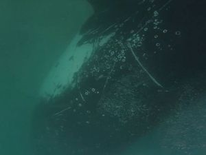 Incredible whale encounter at Double Island Point