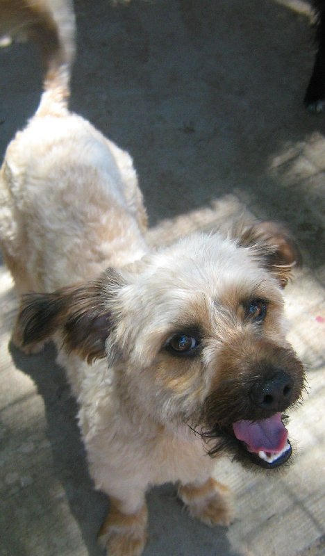The dog in 2007 when it was first adopted by Toowoomba RSPCA.